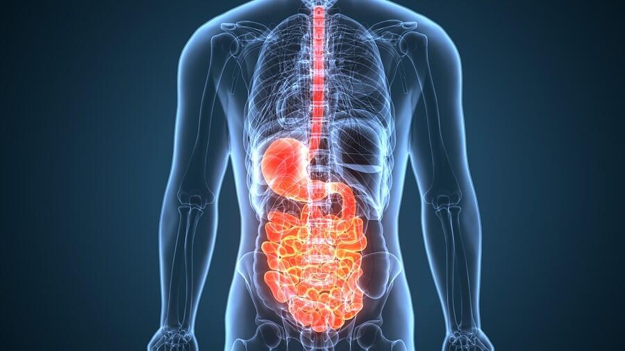 Gesundheit von Magen-Darm