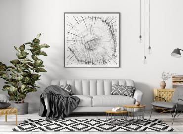 Top 10 Zimmerpflanzen – attraktiv und pflegeleicht