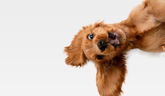 Pflegeleichte Haustiere für Senioren